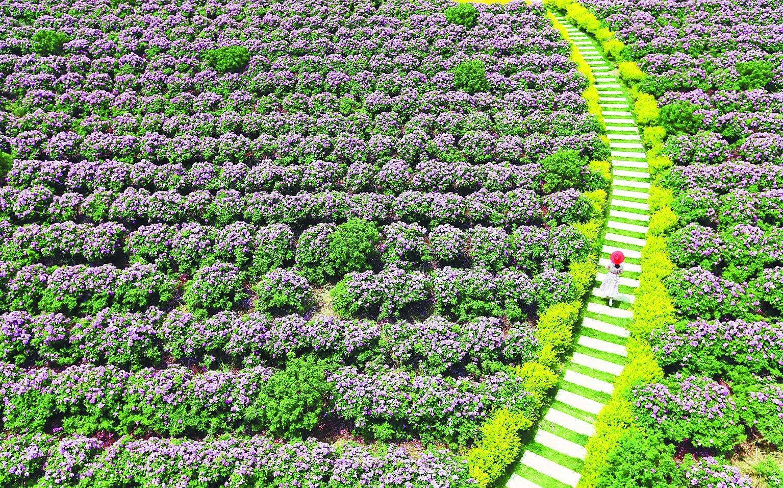 """5月22日,游客在山东即墨市灵山镇""""玫瑰小镇""""产业园休闲赏花."""